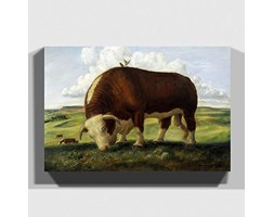 Big Box Art Grande Scatola Arte Stampa su Tela John Steuart Curry Bull Cow, 30 x 50,8 cm
