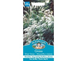 Mr Fothergill's 14522 Grass Silver Grass - Chinese Mint Early Hybrid Seeds Turchese