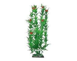 Wave Plant Classic Hygrophila Red Flowers Md