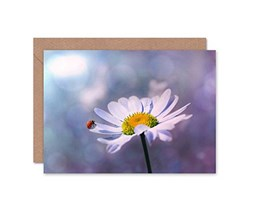 Wee Blue Coo Greetings Card Birthday Gift Nature Ladybug Daisy Flower Close UP Bokeh