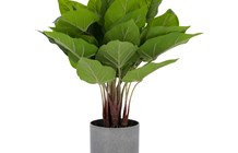 Kave Home - Pianta artificiale Anthurium da 50 cm Verde